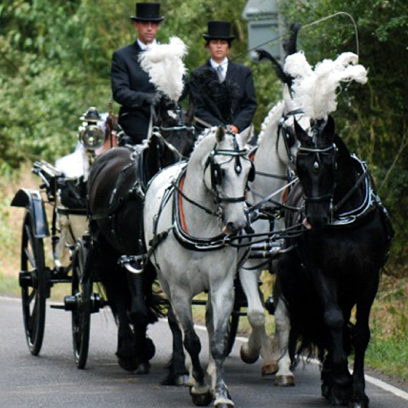 vintage horses and carriage